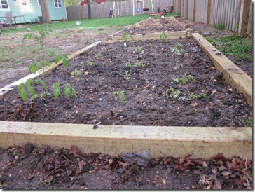 Vegetable Garden A - sweet 100, Rutgers Tomatos  and hot peppers