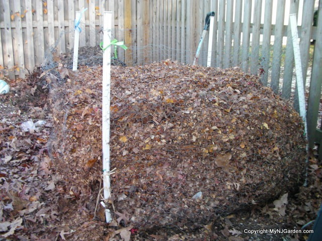 Weeds in the Compost Pile?