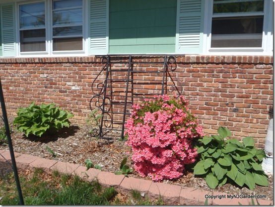 Dug this old bed frame out of the garage today. Do we like it here? Should we let a cucumber climb it?