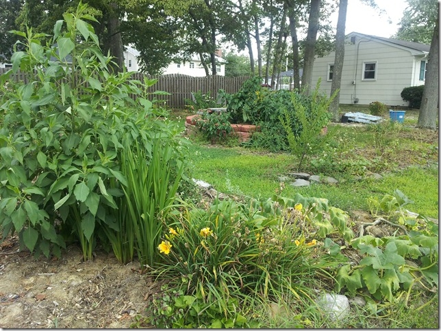 Summer Garden and Front Yard Changes
