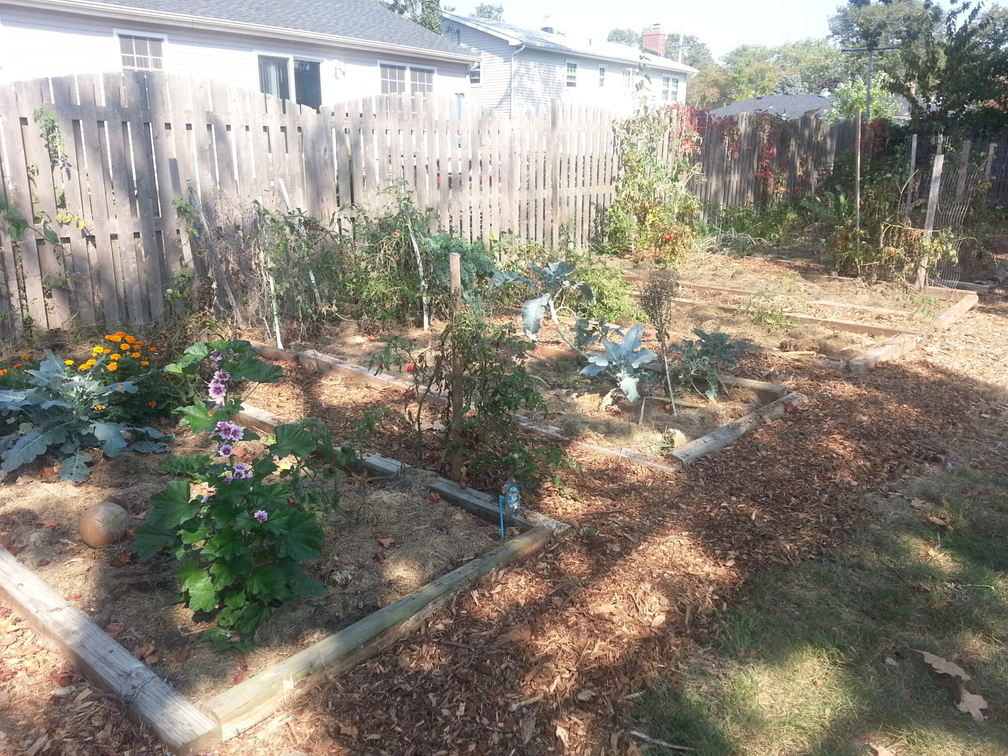 garden layout changes and setting up the greenhouse for cool