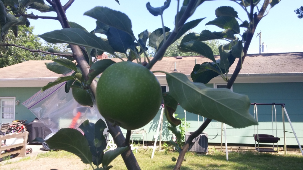 Productive fruit trees with a few bad apples