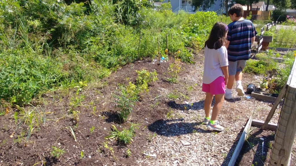 Community Garden Introductions and A New Mailbox Garden - Grow With
