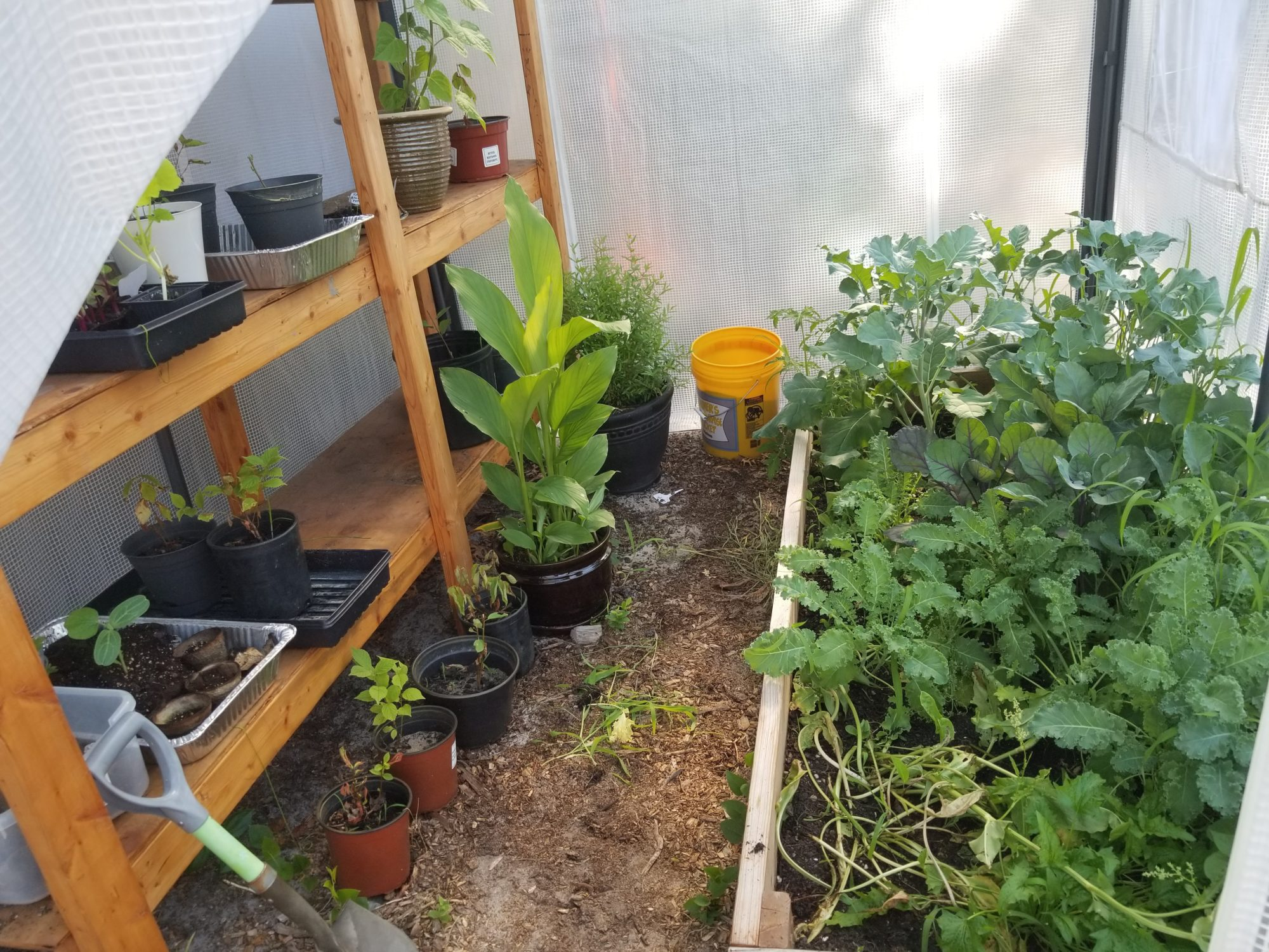 Garden progress and plans, the rain garden and the greenhouse in July 2018